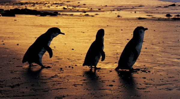 Penguin Parade 2
